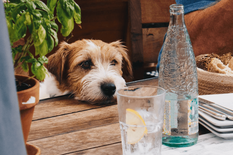 Can dogs damage water bottles