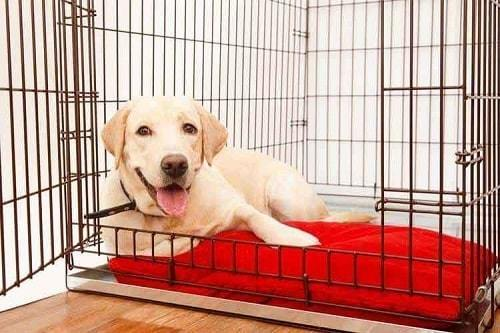 The dog is sitting inside the crate