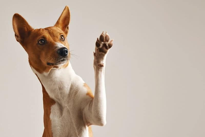 coconut oil can make dog's paw pads for health