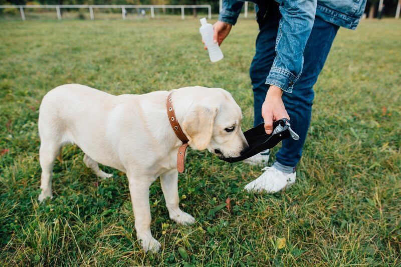 don't forget to keep your dog well-supplied freshwater outside