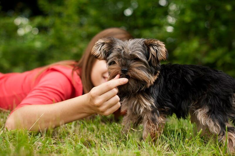 woman feeding which is good for dog's body