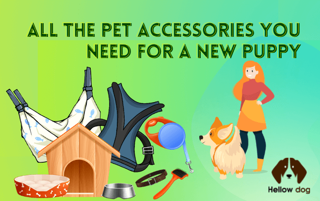 All the Pet Accessories You Need for a New Puppy