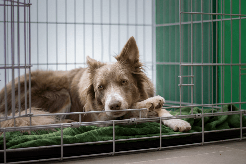 Forge positive associations with your dog's crate! This one looks like a cozy place to rest.