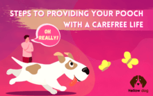 Steps to Providing Your Pooch with a Carefree Life