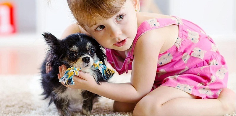 The child is playing with the dog with the tug of war