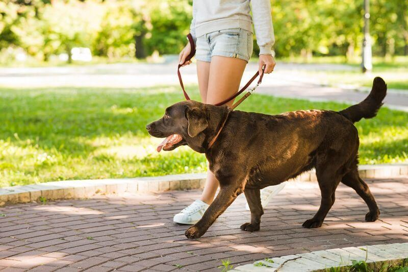 The woman is walking with her dog and holding the dog's leash