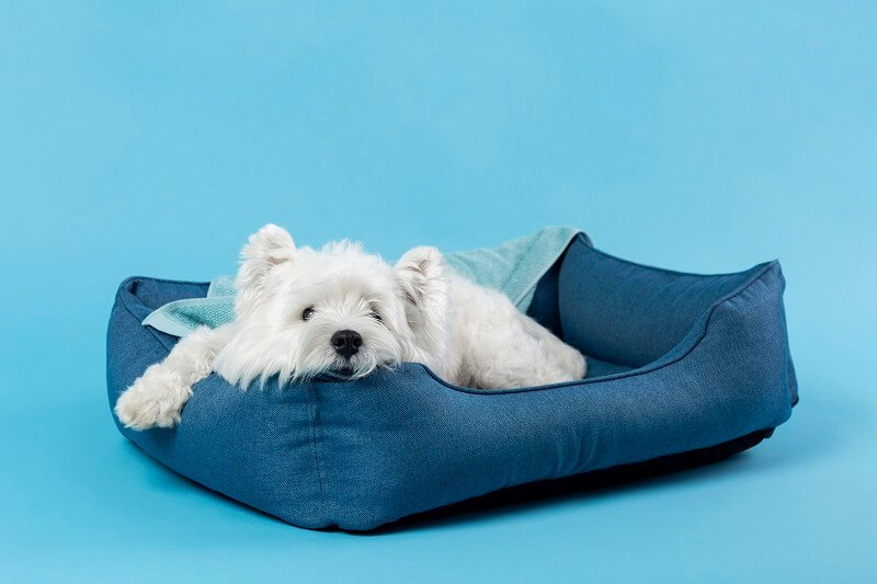 This pup is comfy-cozy in his doggy bed