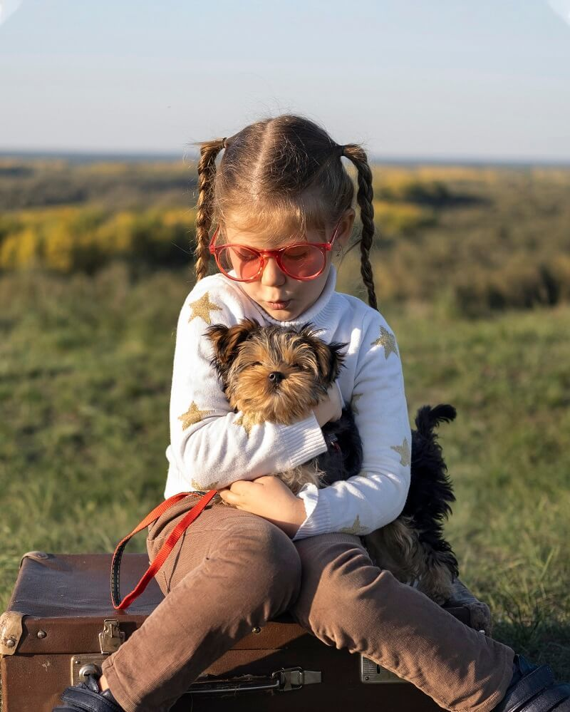 A little Girl Play with his Shih Poo Puppy Dog