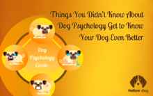 Know about Psychology of dogs