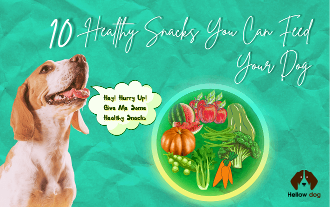 Healthy Feed for Your Dog